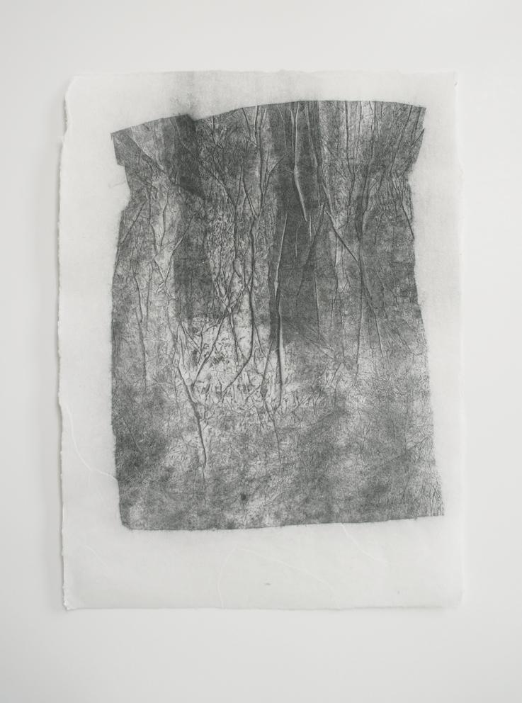 Wald überarbeitet (web)
